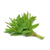 Fresh mint (1 bunch)